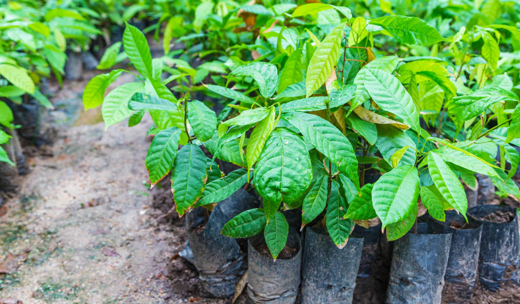 Drink Coffee to help plant trees